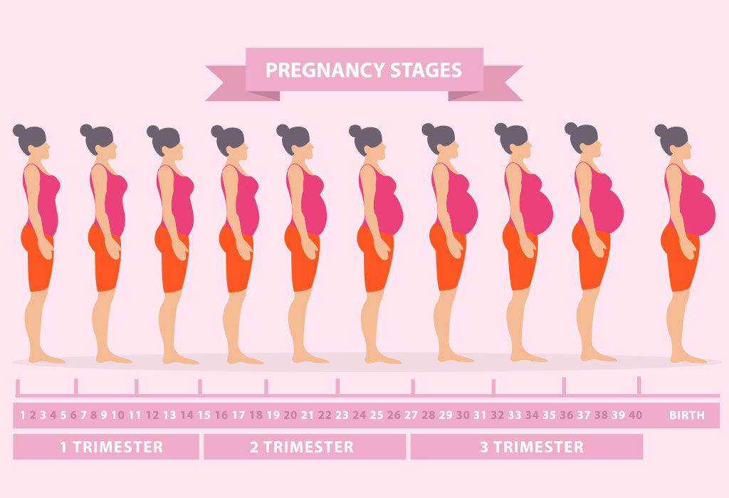 Pregnancy Symptoms Week By Week  First Trimester -1057