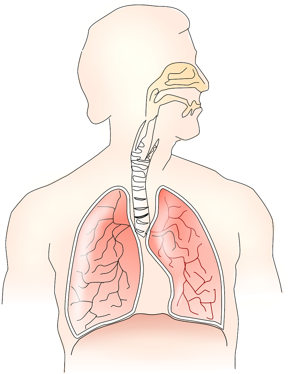 REMEDIES FOR BREATHING PROBLEMS