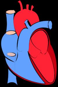 Heart Diseases in Women